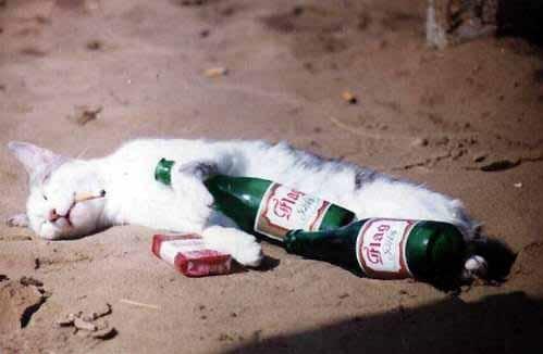 gato borracho